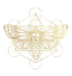 golden moth over sacred geometry sign isolated vector image