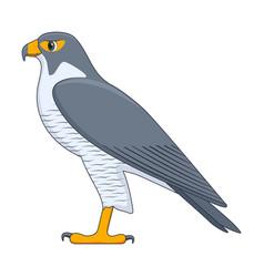 Peregrine falcon bird on a white background vector