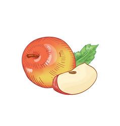 Red fresh apple hand drawn vector