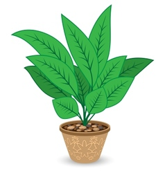 Plant in Flowerpot Isolated on White Background vector image