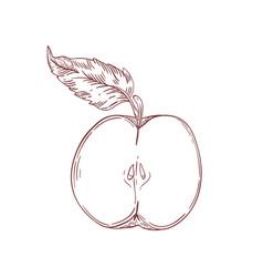Apple half realistic hand drawn vector