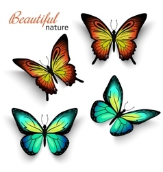 Beautiful realistic butterflies green and orange vector