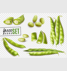 green beans realistic transparent set vector image