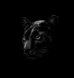 Head a black panther isolated on a black vector