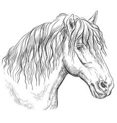 Horse portrait-12 vector
