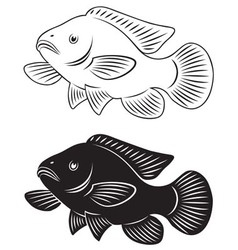 tilapia fish vector image