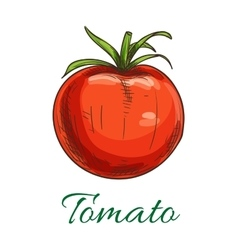 Tomato fruit vegetable icon vector