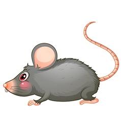 A gray rat vector