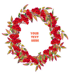 festive wreath made of branches of mountain ash vector image vector image