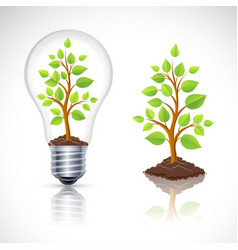 Green plant in light bulb with reflection vector image