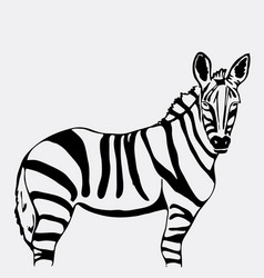 hand-drawn pencil graphics zebra vector image vector image