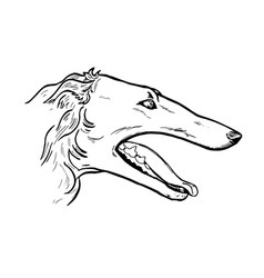 greyhound head in profile vector image
