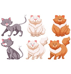 Different specie of cats vector image