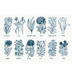 garden plants hand drawn botany set vintage vector image