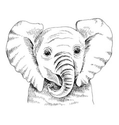 Hand drawn portrait funny indian elephant baby vector