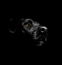 Head a labrador retriever dog portrait on a vector
