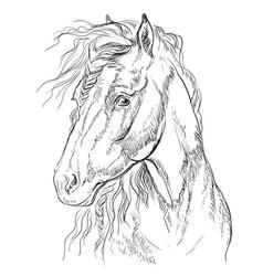 Horse portrait-13 vector