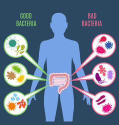 Intestinal flora gut health concept vector