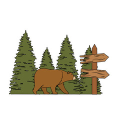 Wooden arrow guide label with bear grizzly vector