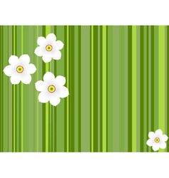 flowers daffodils vector image
