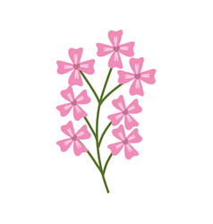 pink branch flowers decoration vector image