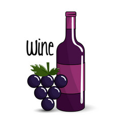 Bottle of wine with bunch of grapes icon vector