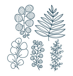 decorative leaves botanical elements vector image
