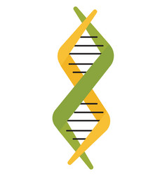 dna on white background vector image