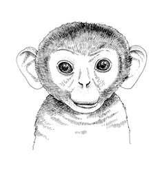 Hand drawn portrait funny monkey baby vector