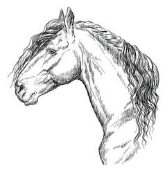 Horse portrait-15 vector