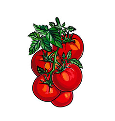 tomatoes isolated on white background vector image