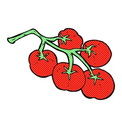 Tomatoes on vine vector