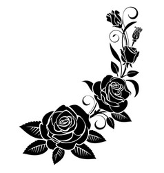 branch roses vector image