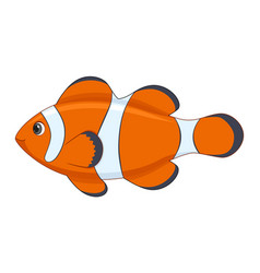 clown fish on a white background vector image