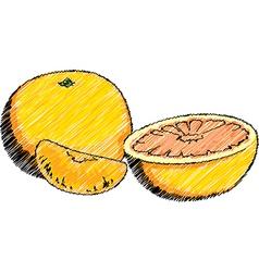Orange and Mandarin vector image