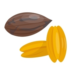 Pile of nuts Peacans vector image