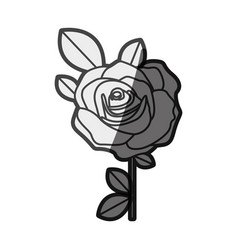 monochrome silhouette flowered rose with leaves vector image vector image