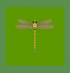 Flat shading style insect dragonfly vector