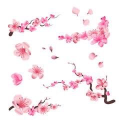 spring sakura cherry blooming flowers pink petals vector image vector image