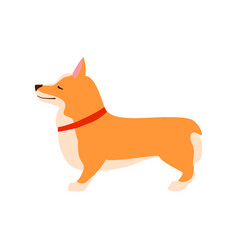 happy cute dog welsh corgi puppy sits flat vector image