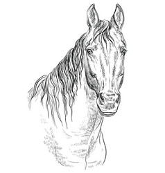 Horse portrait-19 vector