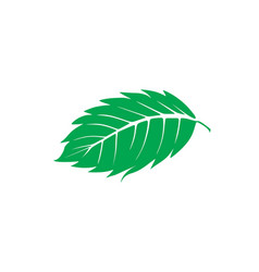 mint leaf logo designs inspiration isolated on vector image