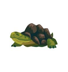 sea turtle water reptile cartoon vector image