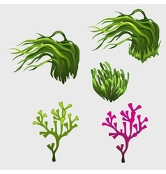 Vegetable set with grass icons for your needs vector image