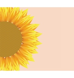 Sun flower with pattern vector