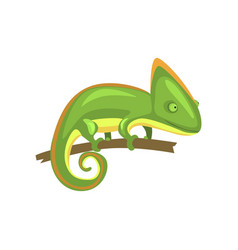Green chameleon amphibian animal cartoon vector