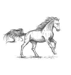 Running galloping white horse sketch portrait vector image