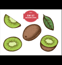 collection of hand drawn colored kiwi vector image