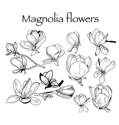 collection of magnolia flower and leaves vector image