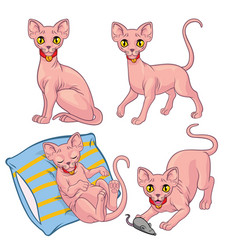 cute sphynx cat vector image